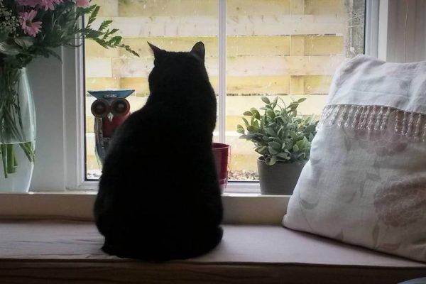 Bird watching by Garfunkel